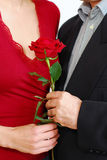 Couple rose Stock Photo