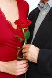 Couple rose Stock Photo