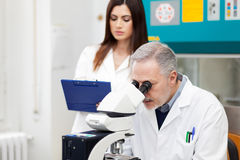 Couple of scientist researching in a laboratory Royalty Free Stock Image