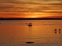 Couple of seagulls on the stone in burning sky in Talin in Estonia Royalty Free Stock Image