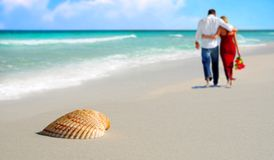 Couple and Seashell on Tropical Beach Stock Photos