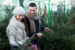 Couple selecting Christmas tree Stock Images
