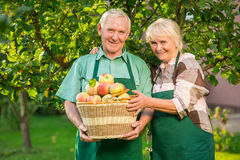 Couple of senior gardeners smiling. Royalty Free Stock Images