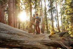 Couple in Sequoia national park in California, USA.  royalty free stock photography