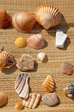 Couple of shells and stones Stock Image