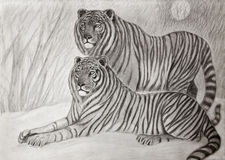 Couple of siberian tigers Royalty Free Stock Image