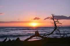 A Couple Sitting on a Tree Branch on the Beach during Sunset in Maui Hawaii stock image
