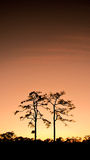Couple of silhouette trees Royalty Free Stock Photography