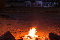 Couple sitting at burning camp fire in the night. Camping in the desert with wild elephants in background. Summer adventures and e Stock Photos