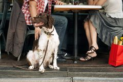 Couple Sitting With Dog At Restaurant Stock Photography