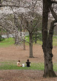 Couple sitting on the grass. Under the trees with a wite lunch bag between them Royalty Free Stock Photos