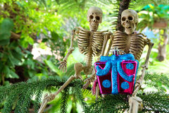 Couple of Skeletons under the pine trees got a gift Royalty Free Stock Photography