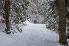 Couple skiing in the woods at Poiana Brasov, Transylvania, Romania stock images
