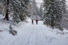 Couple skiing in the woods at Poiana Brasov, Transylvania, Romania royalty free stock image