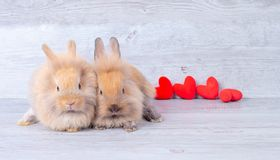 Couple small light brown bunny rabbits on gray background in valentines theme with mini heart behind them royalty free stock photo