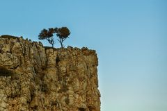 A couple of small trees grow at the top of a cliff in the Aegean. Sea Stock Photography