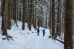 Couple snowball fighting in the woods royalty free stock images