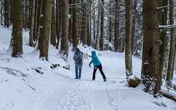 Couple snowball fighting in the woods, Transylvania, Romania royalty free stock photo