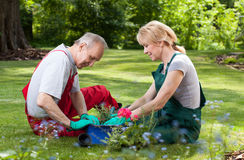 Couple spends his free time working in the garden Royalty Free Stock Photo
