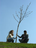 Couple. spring. tree Stock Images