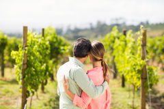 Couple standing with arm around and looking at nature. In vineyard Royalty Free Stock Images