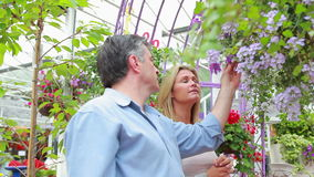 Couple standing looking at a plant in hanging basket Stock Images
