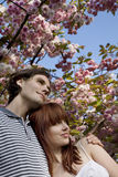 Couple Standing Under Cherry Blossom Tree Royalty Free Stock Photography