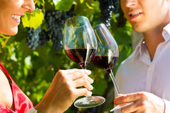 Couple standing at vineyard and drinking wine. Woman and man standing at vineyard and drinking wine at sunshine and smiling Stock Image