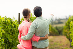 Couple standing in vineyard and pointing at nature. On a sunny day Stock Image