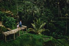 Couple standing on wooden bridge near rice terraces in Bali Indonesia. Holding hands. Romantic mood. Tropical vacation royalty free stock images