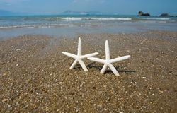 Couple of starfish Stock Photo
