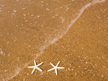 Couple of starfish Stock Photos