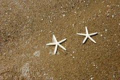 Couple of starfish Royalty Free Stock Image
