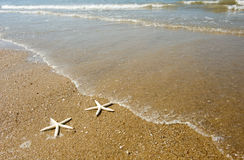 Couple of starfish Royalty Free Stock Images