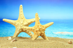 Couple of starfish Royalty Free Stock Photos