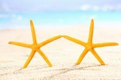 Couple of starfish on the beach Stock Photo