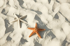 Couple of starfish lying on a tropical beach Stock Photo