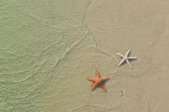 Couple of starfish on a tropical beach Stock Images