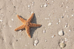 Couple of starfish on a tropical beach Stock Photo