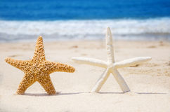 Couple of starfishes on a beach Stock Images