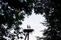 Couple of storks sit in nest on electric pole Stock Photos