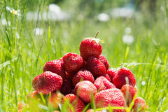 Strawberries on green grass. Couple of Strawberries on green grass in summer Royalty Free Stock Image
