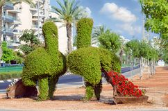 Couple street decorative bush peacocks. Rishon LeZion, Israel-June 17, 2017: Golda Meir Street pavement decorations in form of two green bush topiary peacocks Stock Photography