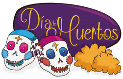Couple of Sugar Skulls with Marigolds for Dia de Muertos, Vector Illustration Royalty Free Stock Photo