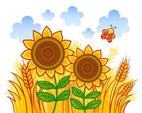 Couple of sunflowers on a background of wheat. Vector illustration in cartoon style Royalty Free Stock Image