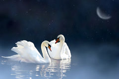 Couple swan Stock Photography