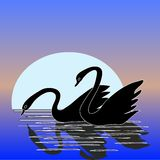 Couple of Swan with Moonlight royalty free stock images