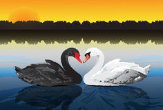 Couple swan at peaceful lake Stock Images