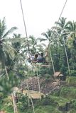 Couple swings in the deep jungle of Bali island. Indonesia Royalty Free Stock Image