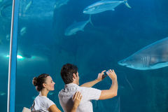 Couple taking photo of shark Stock Photography